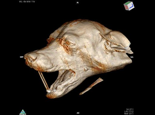 3D-head CT Image